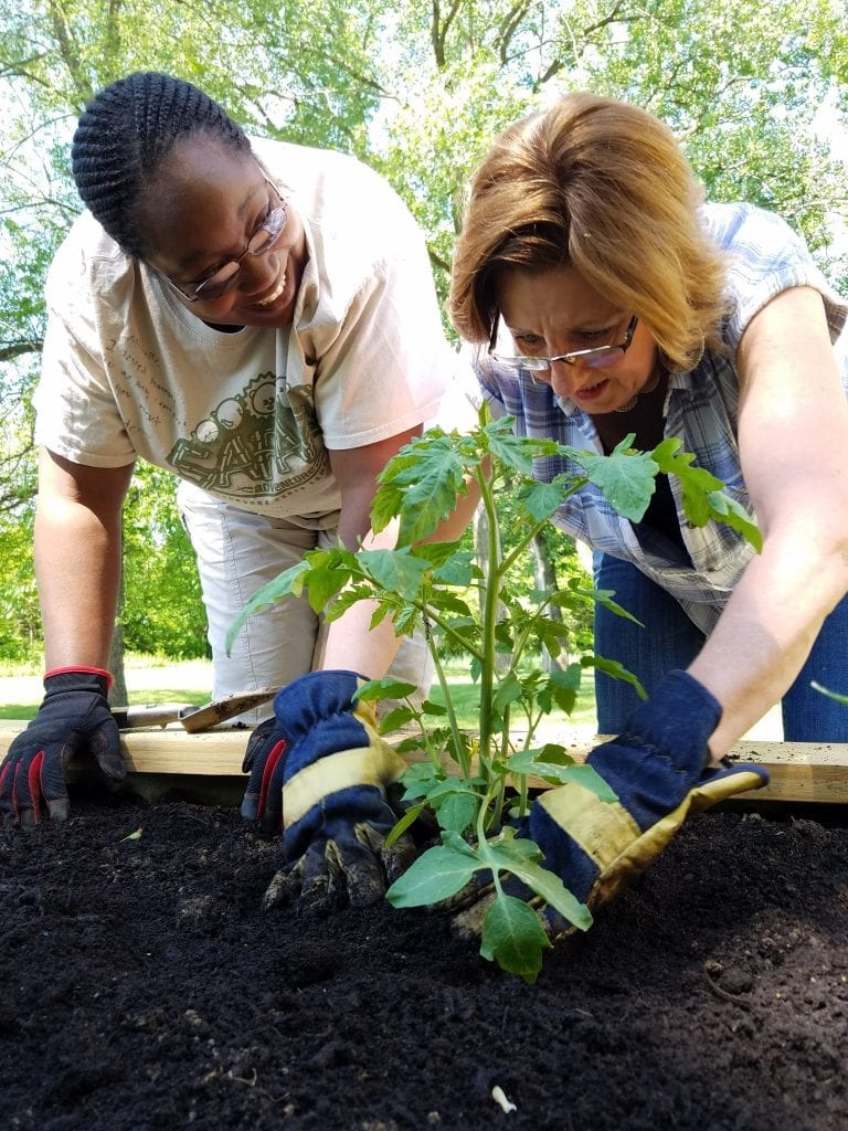 Women planting vegetables in garden